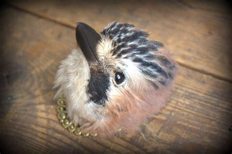 turn  hipster   cuckoo clock   bird head