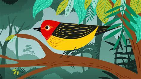 Lenda do Uirapuru - História do famoso pássaro do folclore ...