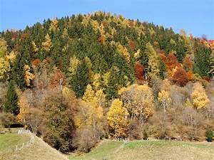 Schöne Herbstbilder Kostenlos : sch ne herbstbilder kostenlos download ohne registrierung ~ A.2002-acura-tl-radio.info Haus und Dekorationen