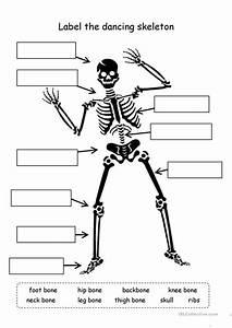 Label The Skeleton Worksheet