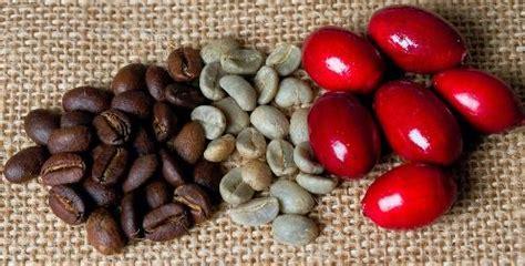 le cafe megato