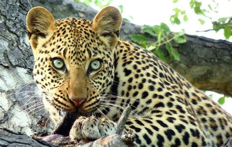 Big 5 Safari Animals