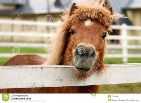 pony friendly preview