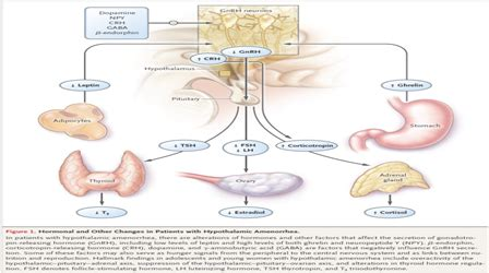 Anatomi Kandungan Wanita Obgynmag Amenore Hipotalamus Fungsional