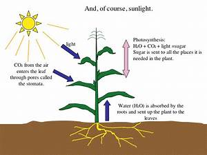 Science Year 3  Photosynthesis