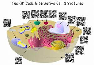 Qr Cell Structure