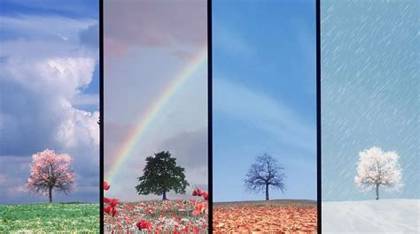 Free Download Natural Scenery Picture  What The Same Tree Is Like In The Four Seasons, Live