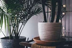 Große Zimmerpflanzen Wenig Licht : 9 pflegeleichte gro e zimmerpflanzen f r daheim b ro indoorgarten ~ Markanthonyermac.com Haus und Dekorationen