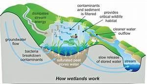 Protecting Sri Lanka U2019s Wetland Ecosystems