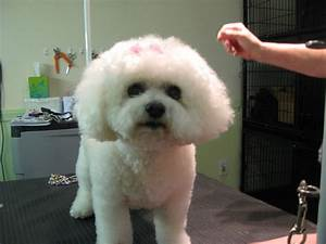 the dog house grooming With the dog house grooming