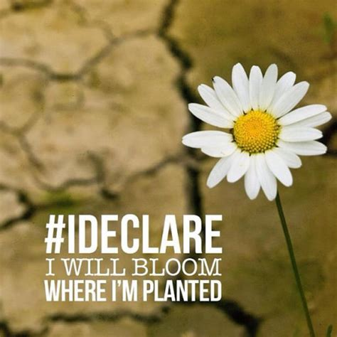 declare   bloom  im planted pictures