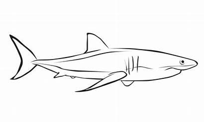 Shark Coloring Pages Sharks Cartoon Sheets Creative