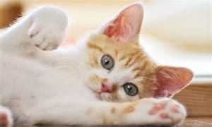 Que Donner A Manger A Un Ecureuil Sauvage : pyr n es atlantiques un chaton se retrouve coinc dans un ~ Dallasstarsshop.com Idées de Décoration