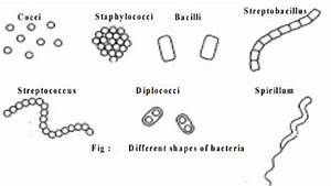 Classification of bacteria based on the shape and ...
