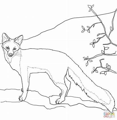 Fox Coloring Gray Pages Drawing Swift Outline