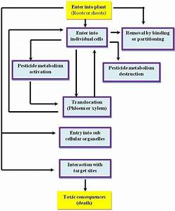 Flow Chart Showing The Sequence Of Events From Pesticides
