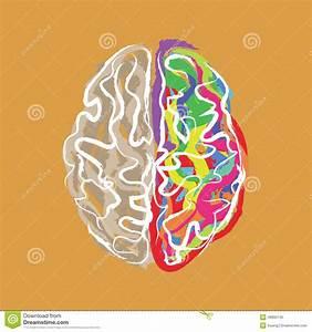 Farbe Mit T : kreatives gehirn mit farbe streicht vektor vektor abbildung bild 46895745 ~ Orissabook.com Haus und Dekorationen