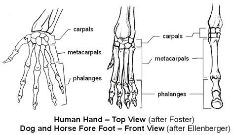 emg zine basic animal anatomy