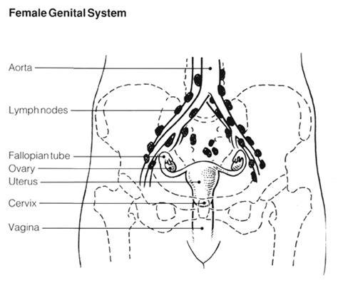 robotic surgery  endometrial cancer robotic surgery