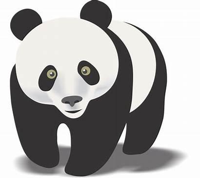 Panda Clipart Clip Pandas Bear Vector Giant