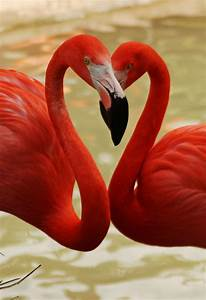 190 best Flamingos images on Pinterest