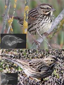 Birds grow bigger beaks to attract potential mates: Study