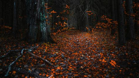 Autumn Leaves In A Dark Forest UHD 8K Wallpaper
