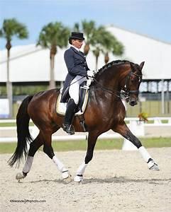 Best 25+ Dressage horses ideas on Pinterest