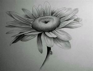 43 best Shading Flowers images on Pinterest   Sunflowers ...