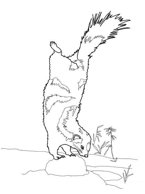 Kleurplaat Stinkdier by Free Printable Skunk Coloring Pages For