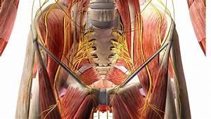 Human Anatomy 3d View