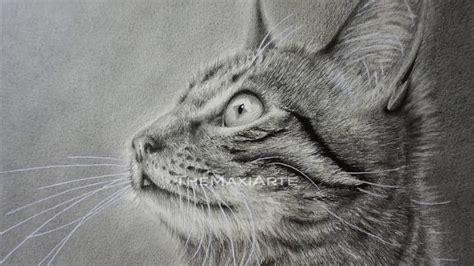 Zeichnung Einer Katze Realistisch Mit Bleistift Zeichnen