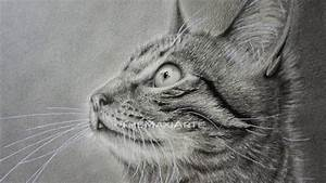 Zeichnen Lernen Mit Bleistift : zeichnung einer katze realistisch mit bleistift zeichnen meine katze belize youtube ~ Frokenaadalensverden.com Haus und Dekorationen