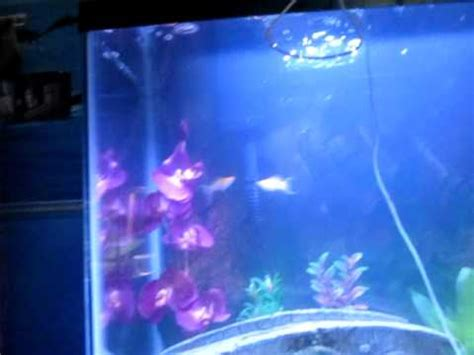 why is my fish tank cloudy new fish tank cloudy water youtube