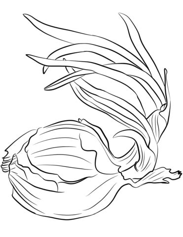 onion coloring page  printable coloring pages