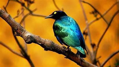 Birds Bird Wallpapers Desktop Wallpaperaccess Backgrounds