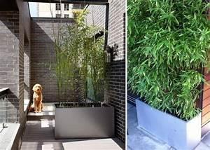 Bac Rectangulaire Pour Bambou : bambou en pot brise vue naturel et d co sur la terrasse ~ Nature-et-papiers.com Idées de Décoration