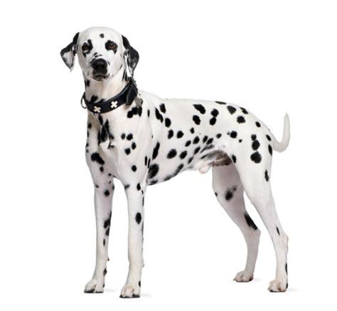 ballaststoffe im hundefutter mehr rohfaseranteil weniger