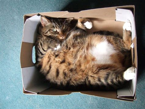 funniest pictures  cats  boxes