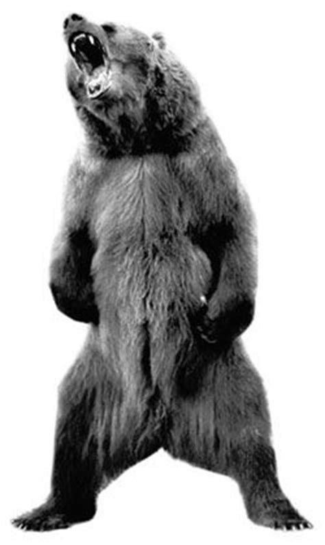 122 best images about Bear on Pinterest   Canada, Da bears and Bear cubs