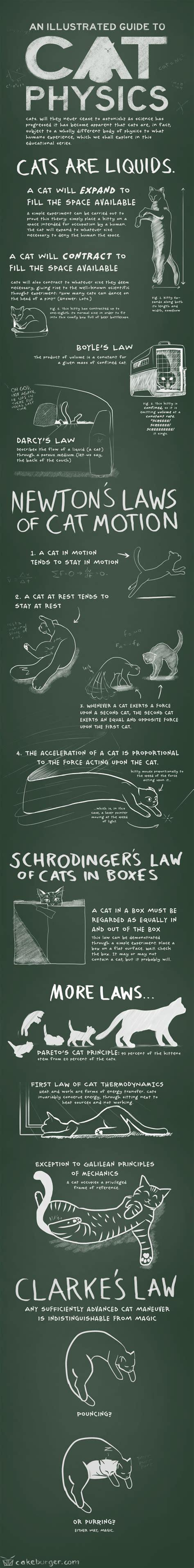 cat physics cats crazy cats funny cats