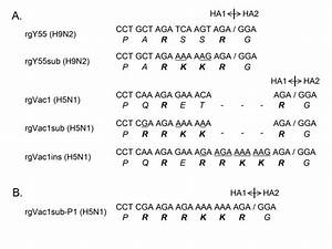 Nucleotide And Amino Acid Sequences At The Ha Cleavage