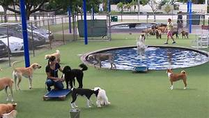 dog cat boarding kennel pompano beach fl With dog care near me