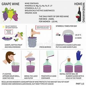 Home Wine Making  Wine From Grapes  Infographics  Stock