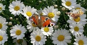 Bilder Blumen Kostenlos Downloaden : blumen und schmetterlingen bilder hd hintergrundbilder ~ Frokenaadalensverden.com Haus und Dekorationen