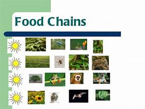 Search Results For  U201ctropical Rainforest Food Chains