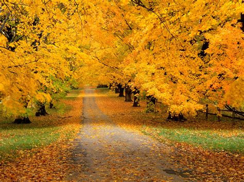 Beautiful Autumn Wallpapers by Hd Walpaper Autumn Wallpapers