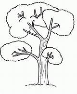 Tree Coloring Pages Coconut Palm Drawing Trees Cartoon Colour Tall Printable Getdrawings Many Zentangle Getcolorings Popular Anycoloring sketch template