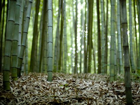 Outer Space Background Images Wallpapers Bamboo Forest Wallpapers