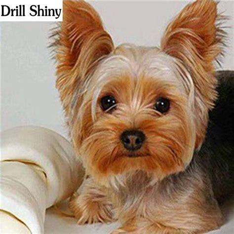 diy diamond painting yorkshire terrier dog  bone